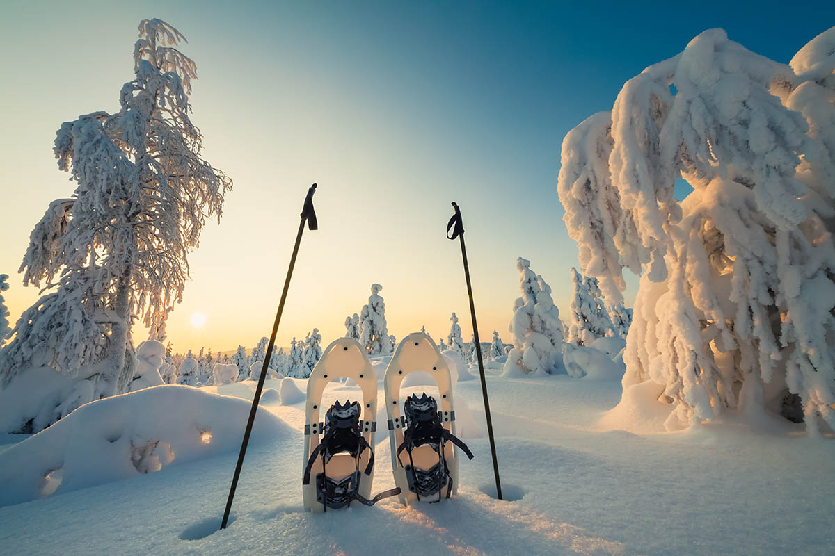 Winter landscape with snowy trees and snowshoes