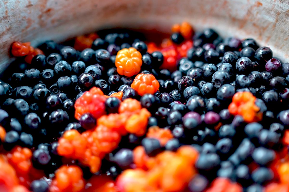 Bowl with cloudberries and northern bilberries