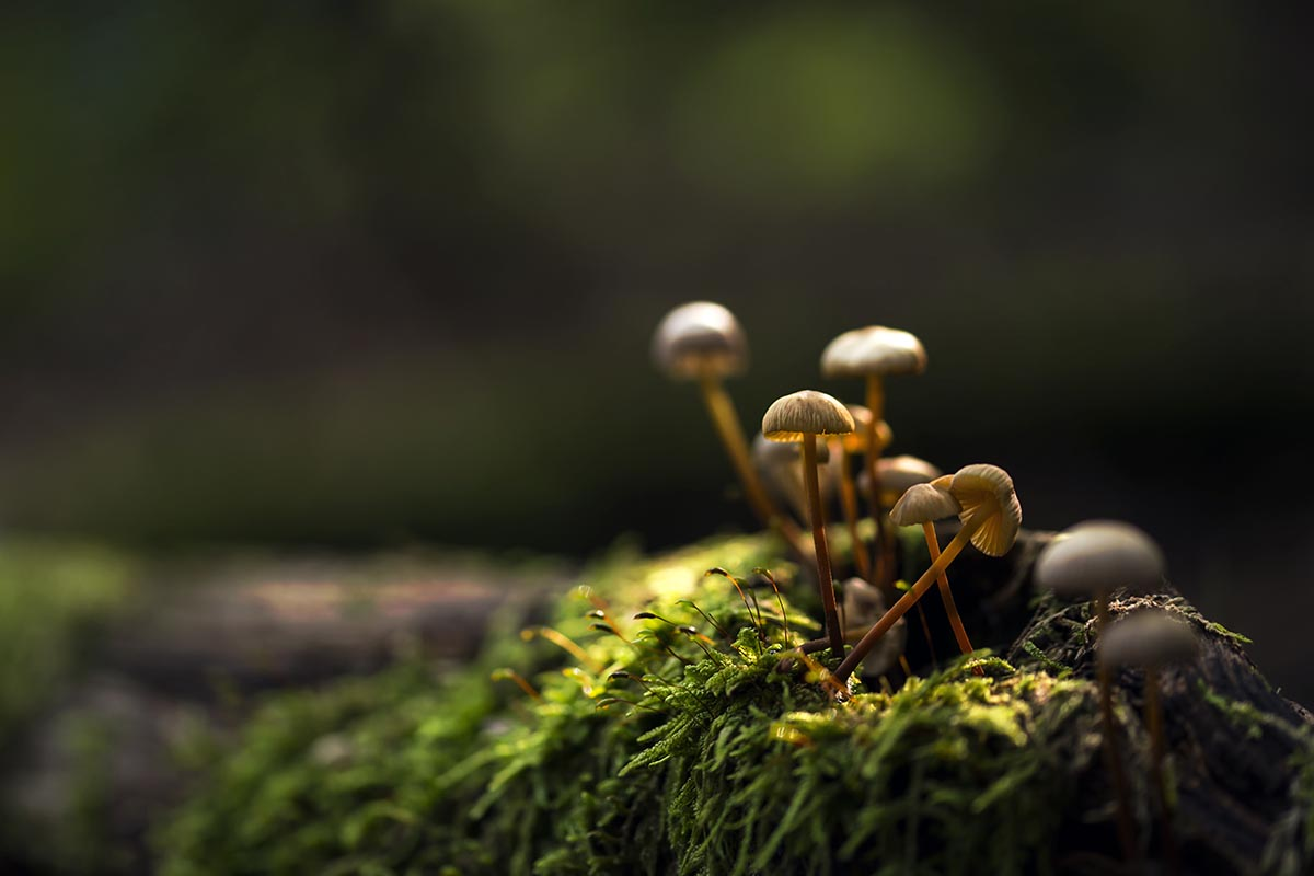 Small mushrooms growing on a moss